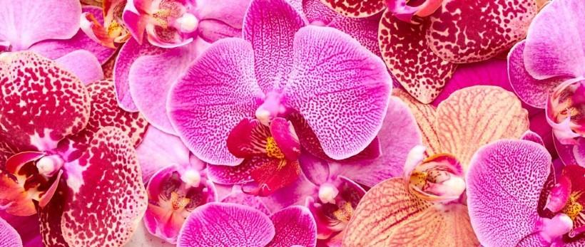 orchideen in klagenfurt am w rthersee blumen wukoutz. Black Bedroom Furniture Sets. Home Design Ideas
